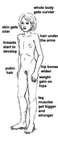 male sensitve breasts during puberty